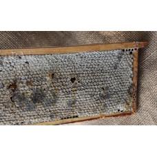 Мед в сотах (нарезка),пластик.контейнер